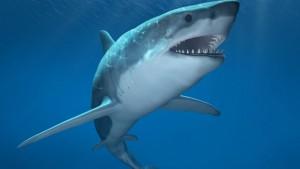 Haaihaai is een dubbelop-groet die extra welkom impliceert?